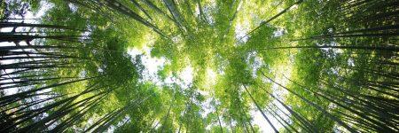 יער, יפן