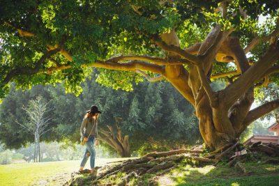 עץ, שלווה, טבע