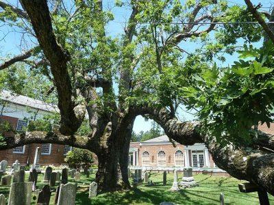 עץ אלון, בסקינג רידג'