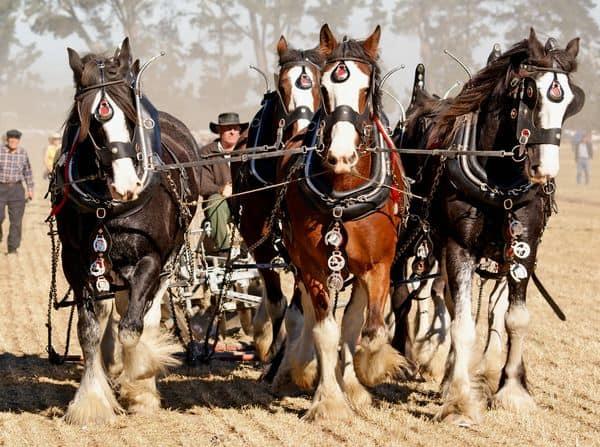 סוסים, חריש, רתמה