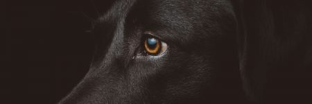 כלב שחור, מבט