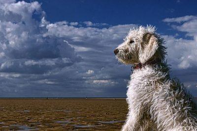 כלב, ים, חוף