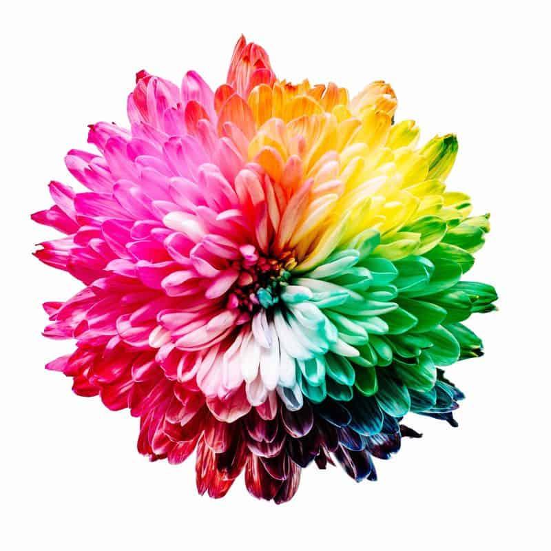 פרח, צבעי הקשת