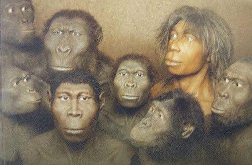 אבולוציה, מינים אנושיים, אדם, גולגולת