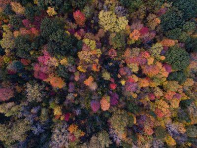 יער, עצים, עלים