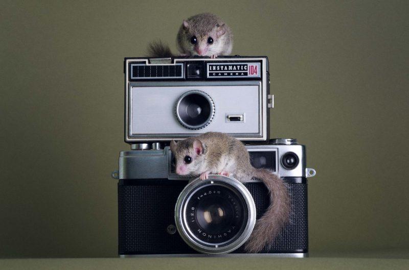 מיוחדים בעלי חיים מיניאטוריים (ואמיתיים לגמרי!) – אלכסון ZP-06
