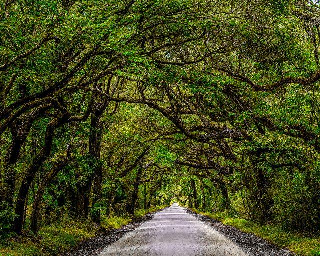 דרך, יער, ענפים