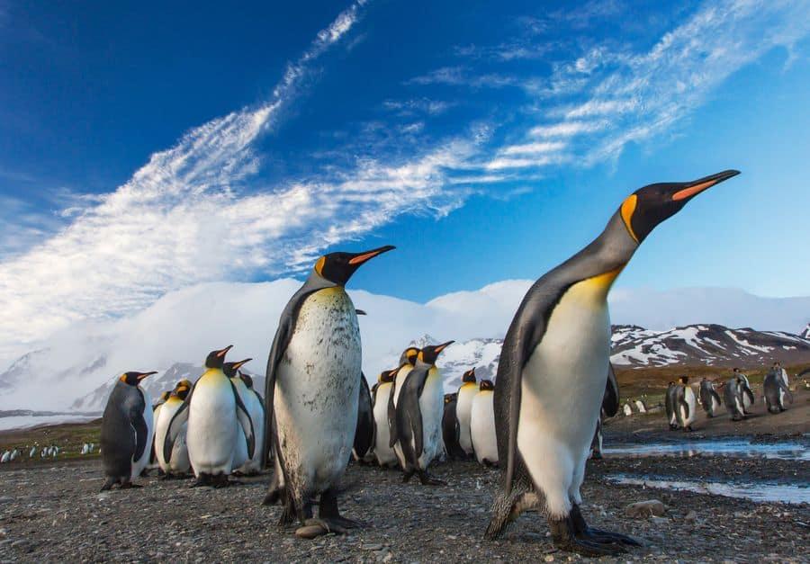 פינגווינים, הקוטב הדרומי