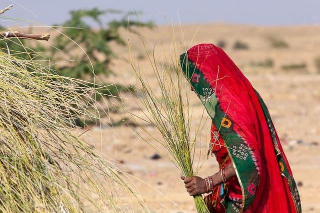 אישה, סארי, מדבר, הודו