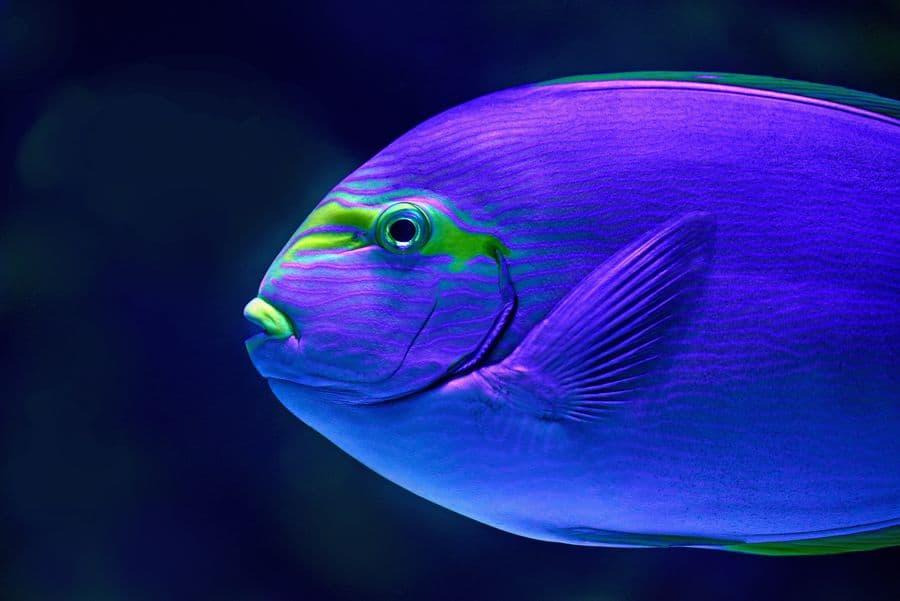 דג, אקווריום, אוסטרליה