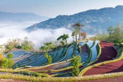 אורז, סין, חלקות