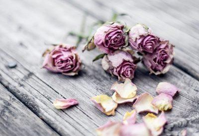 פרחים, נבילה, ורדים