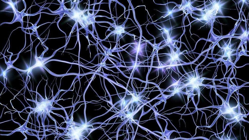 נוירונים