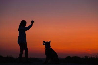 כלב, בעלים, כדור