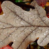 עלה, שלכת, טיפות, גשם