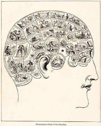פרנולוגיה, מוח, אישיות