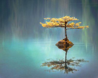 עץ, זן, השתקפות במים, שלווה, איזון