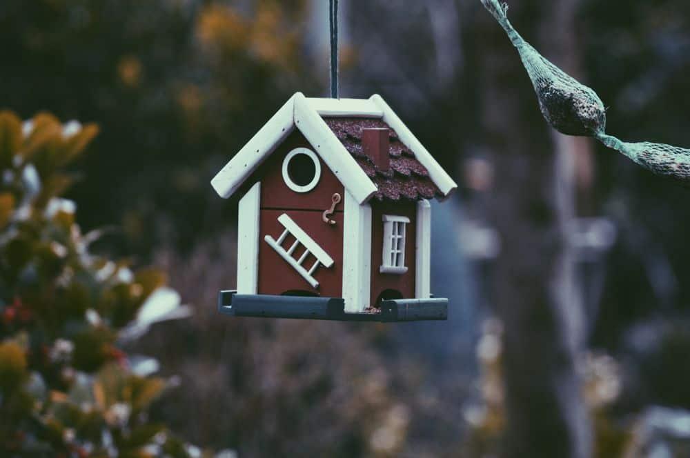 בית, בית ציפורים