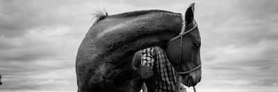 אורוגוואי, סוס