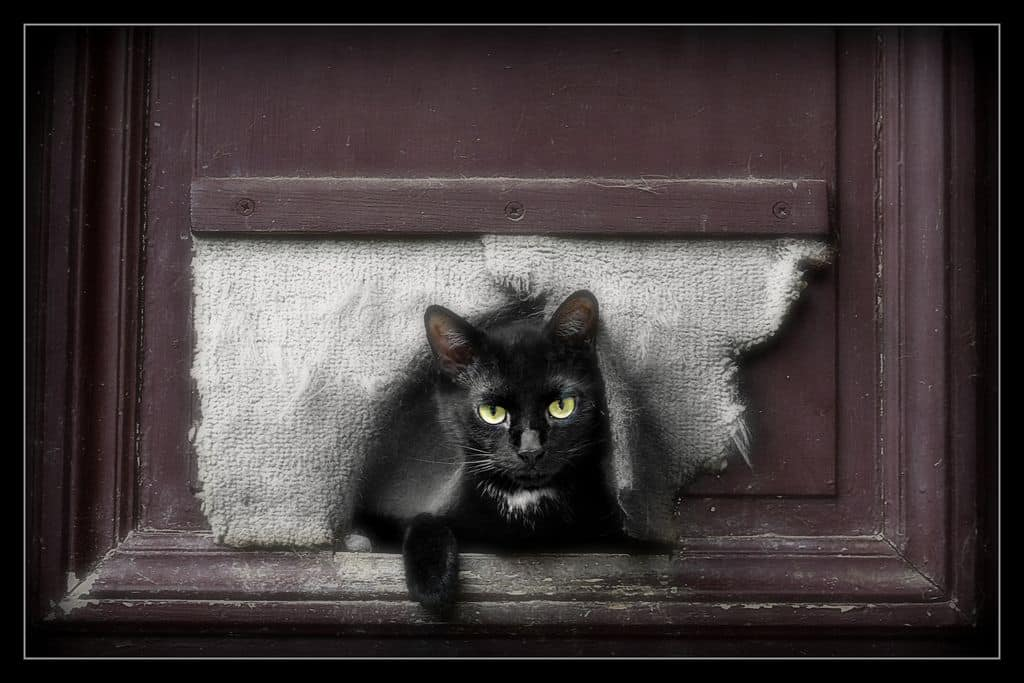 חתול שחור