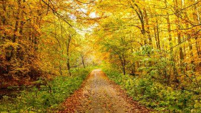 יער, דרך ביער
