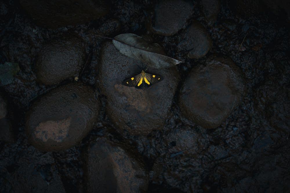 פרפר, אבנים שחורות