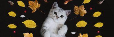 חתול, עלים, שלכת