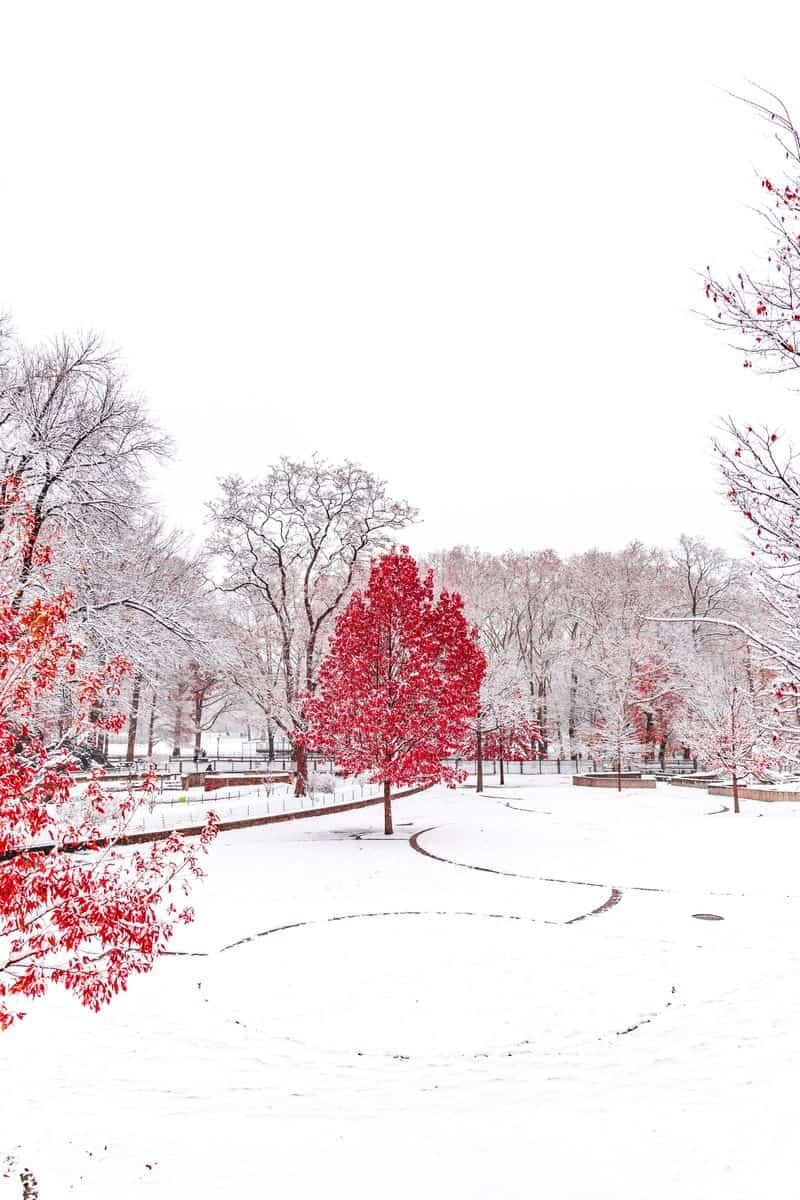 סנטרל פארק, שלג, ניו יורק, עץ, שלכת