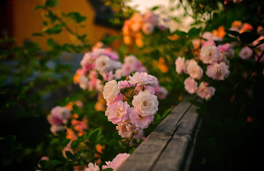 פרחים, מרפסת, מעקה עץ
