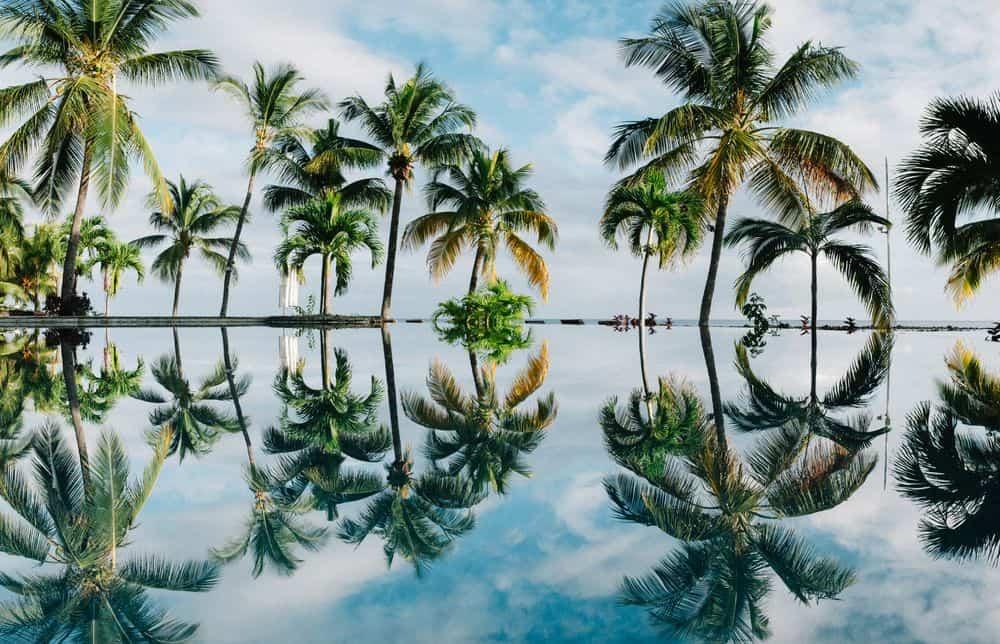גן עדן, מאוריציוס, דקלים