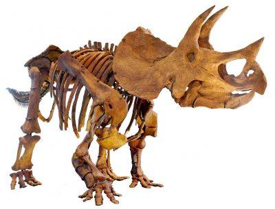 דינוזאור, טריסרטופס