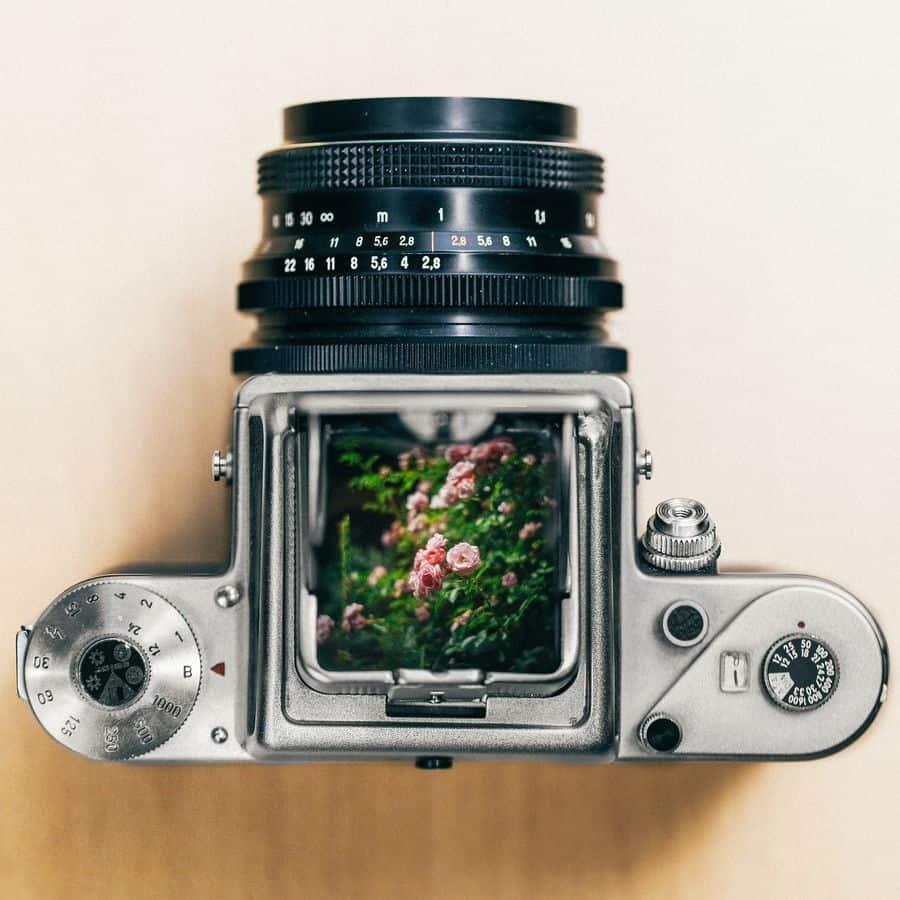 מצלמה, עינית, פרחים