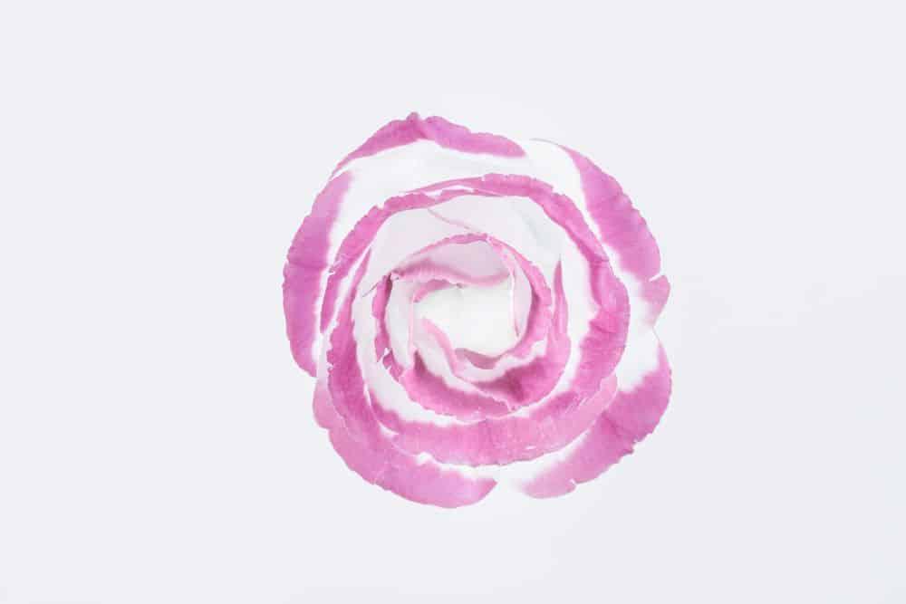 פרח, עלי כותרת