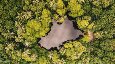 אגם, מקווה מים, יער טרופי