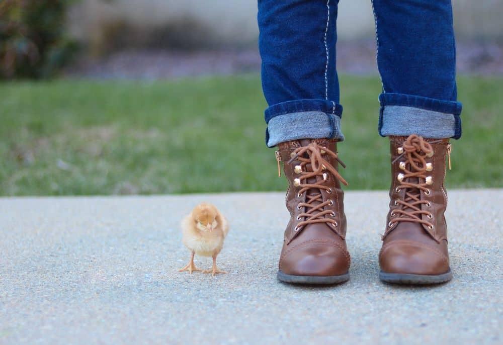 אפרוח, נעליים גבוהות