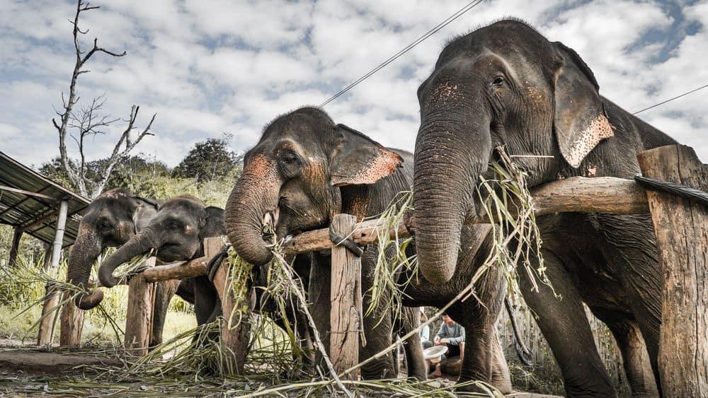 פילים, שמורה