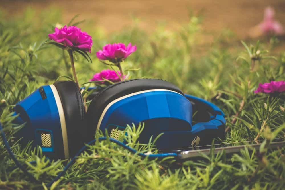 אוזניות, דשא, פרחים