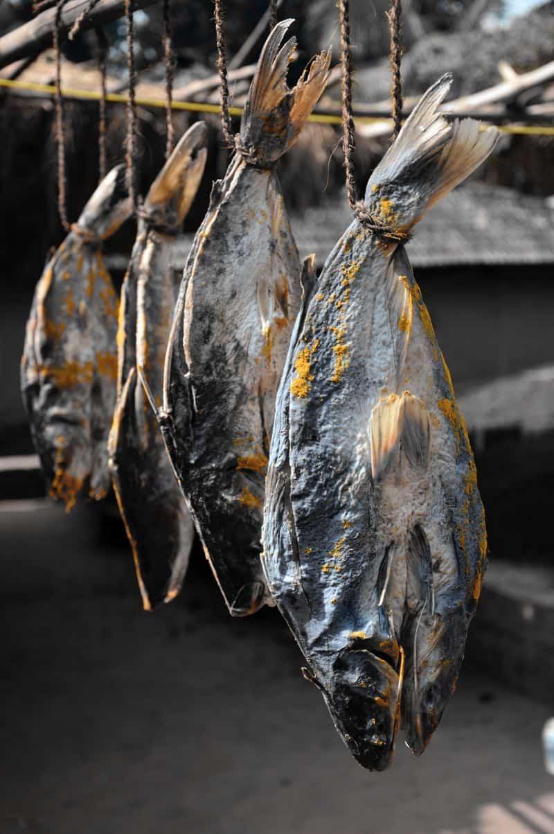 דגים מיובשים