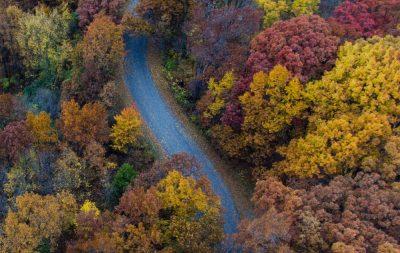 יער, דרך