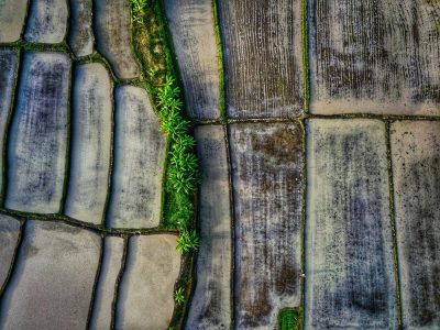 שדות אורז, אינדונזיה