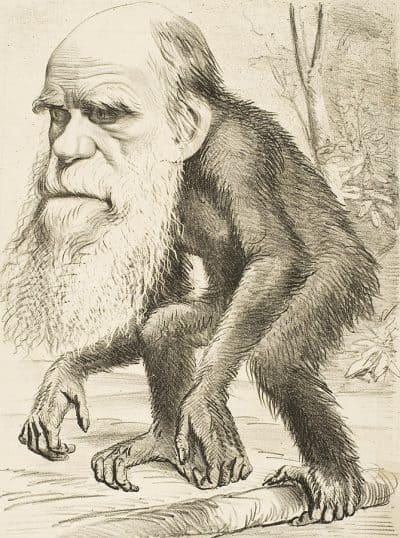 דרווין, מוצא האדם, קוף