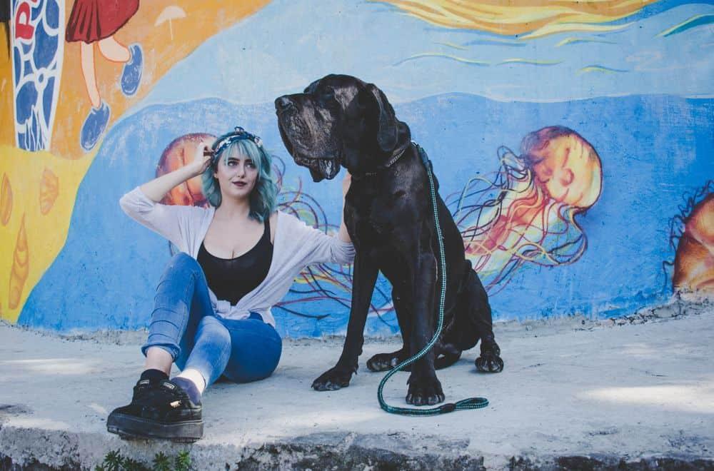 כלב גדול, בחורה, גרפיטי