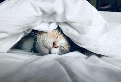 חתול, שינה, ישן
