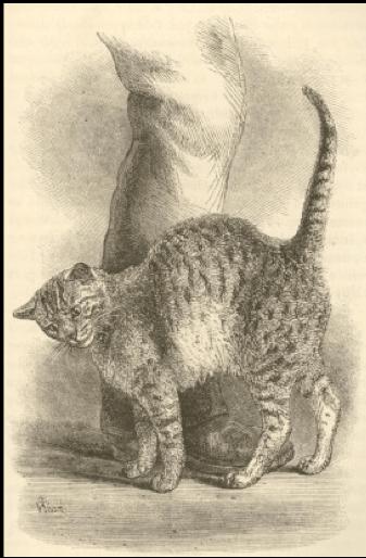 חתול, מחוות ידידות