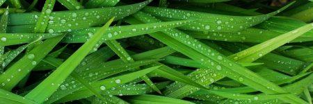 עשב, דשא, עלי עשב, עלי דשא