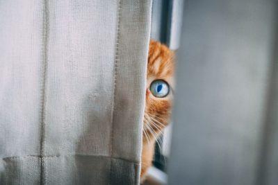 חתלתול, חתול, וילון