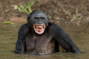 בונובו, חיוך