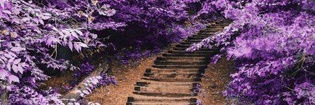 שביל, מדרגות, עלים סגולים