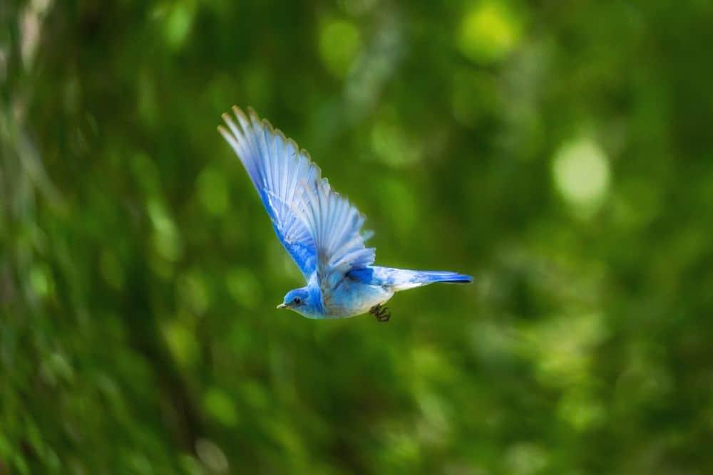 ציפור, מעוף
