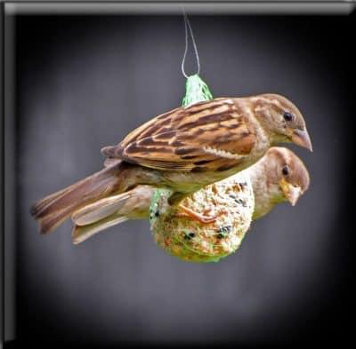 ציפורים, האכלה, אוכל, רעב